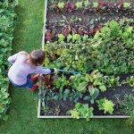 Cómo hacer que su casa se vea deslumbrante con los beneficios de la jardinería?